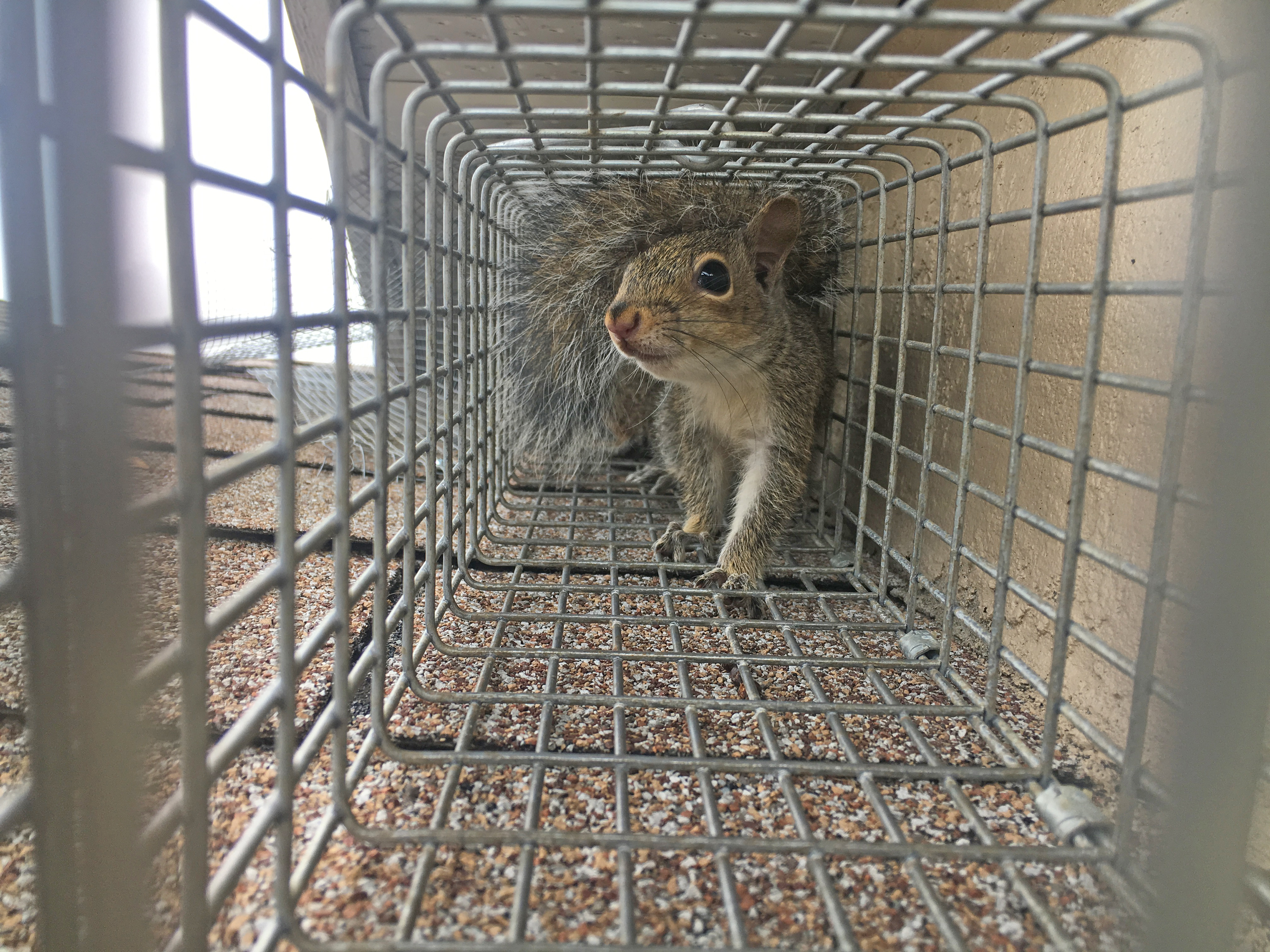 Frequently Asked Questions About Wildlife Removal