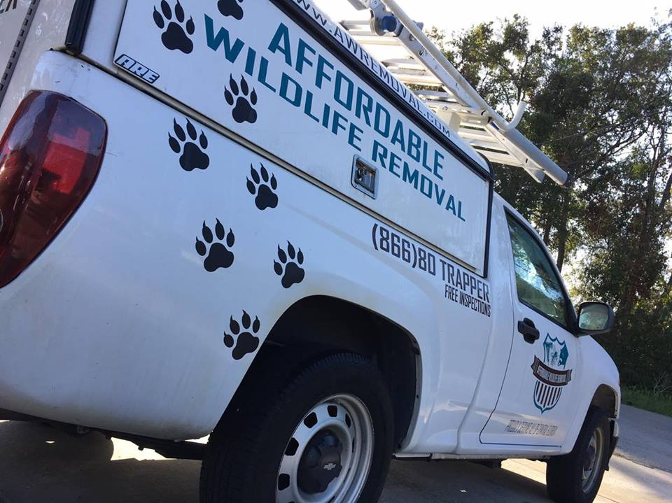 Wildlife Trapping Services in Orange County Florida