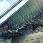 Frequently Asked Questions: Squirrels
