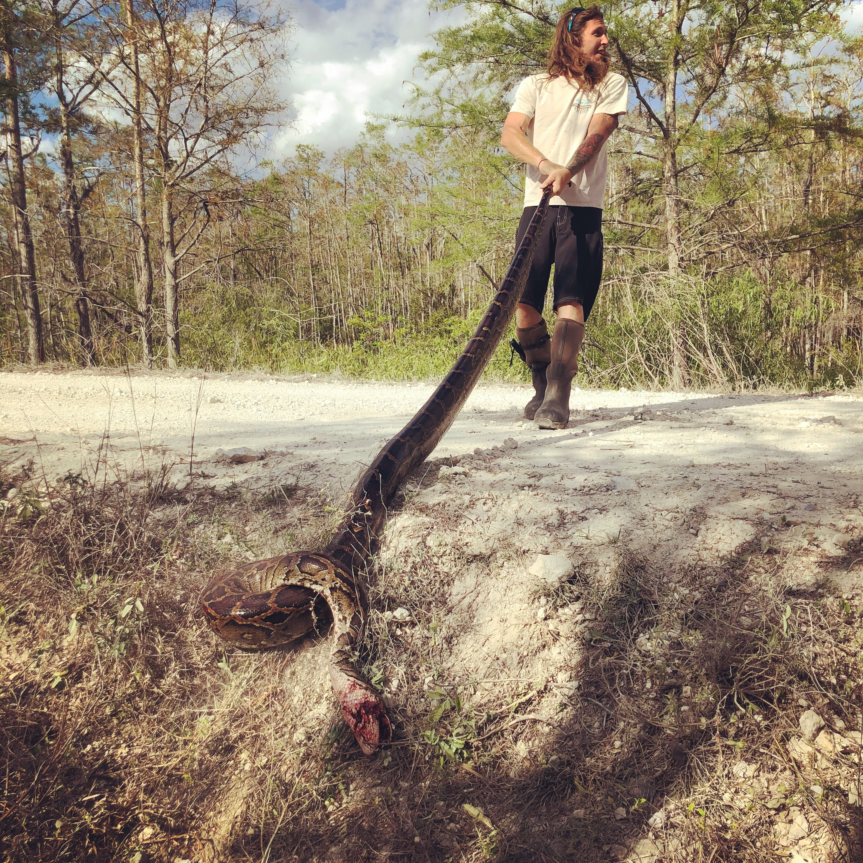 Photograph of snake removal