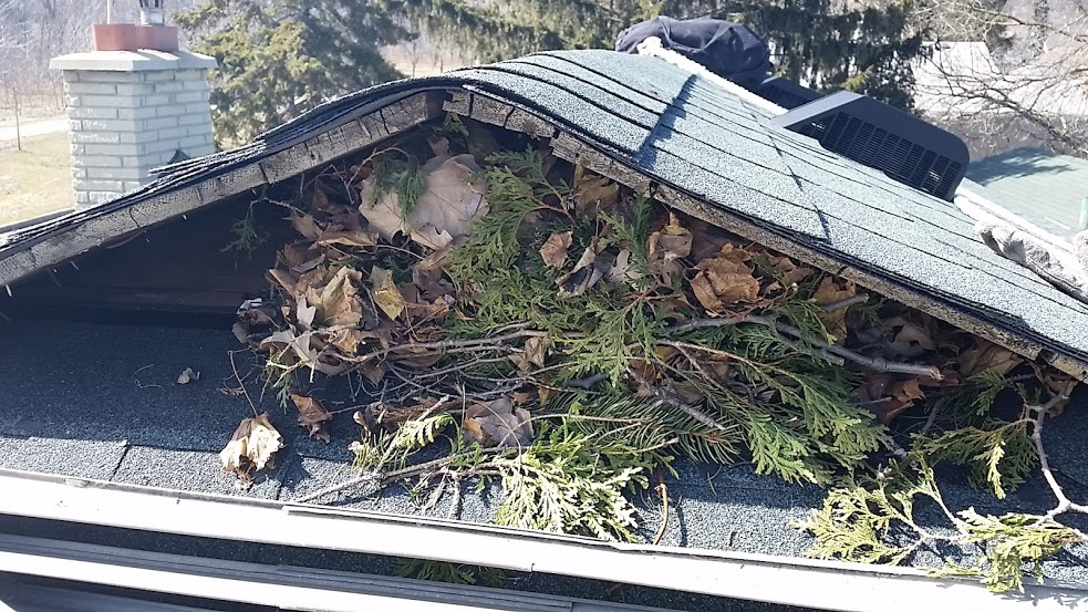 Image of damage to a roof done by a squirrel infestation