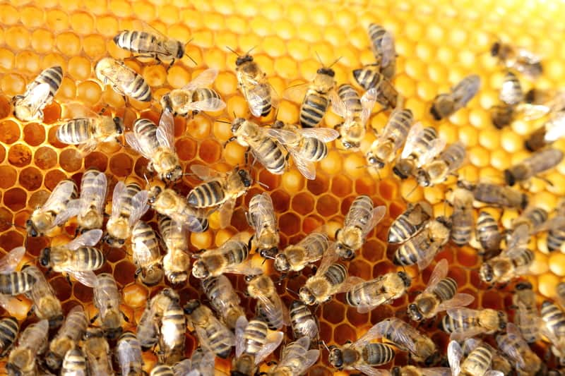 Picture of a honey bee habitat/hive
