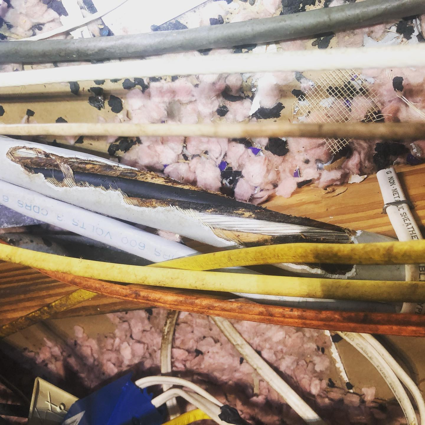 Image of Orlando animal damage in attic needing new wires