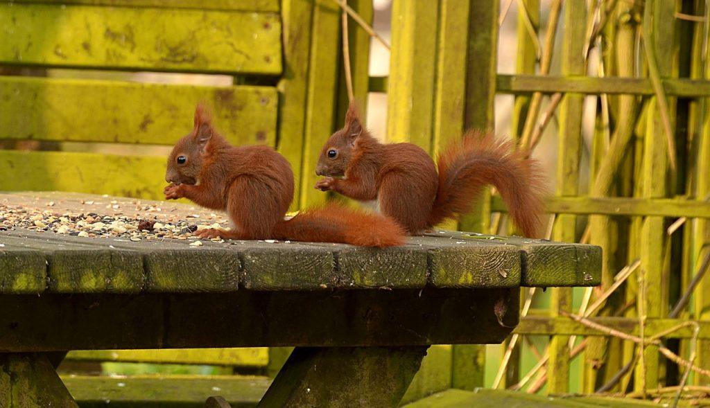 Picture of squirrels in their habitat