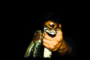 Florida-Snake-Removal-Services